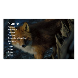Red Fox at Shipwreck Courtney Ford Double-Sided Standard Business Cards (Pack Of 100)