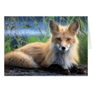Red fox beautiful photo custom blank note card