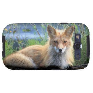 Red fox beautiful photo portrait, gift samsung galaxy SIII cases