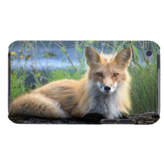 Red fox beautiful photo portrait, gift iPod touch case