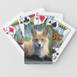 Red fox beautiful photo portrait, gift bicycle playing cards