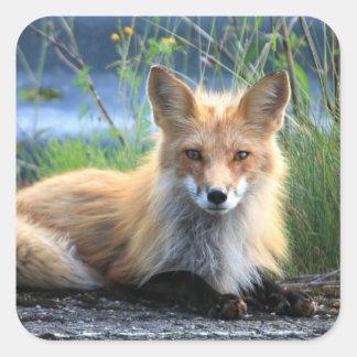 Red fox beautiful photo portrait stickers, gift square sticker