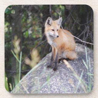 Red fox beverage coaster