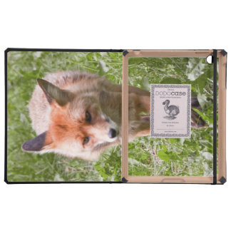 Red fox covers for iPad