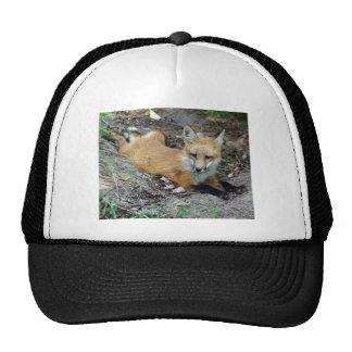 Red Fox - Chillin Trucker Hat