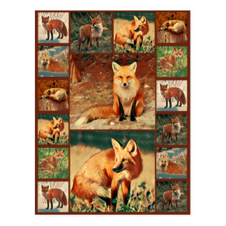 Red Fox Collection Postcard