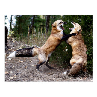 Red Fox - Dancing Post Cards