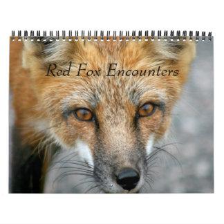 Red Fox Encounters Wall Calendars