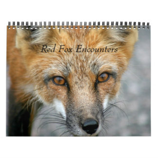 Red Fox Encounters Wall Calendar