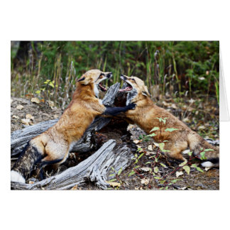 Red Fox - Fight Greeting Cards