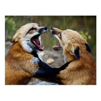 Red Fox Fight Postcard
