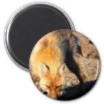 Red Fox Habitat Magnet Fridge Magnet