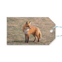 Red Fox in a field Gift Tags