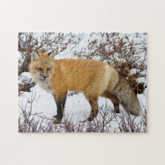 Red Fox in snow in winter Jigsaw Puzzle