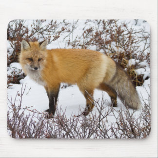 Red Fox in snow in winter Mousepad