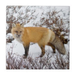 Red Fox in snow in winter Tile