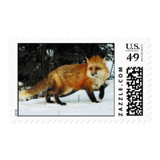 Red Fox  In Snow Postage Stamp