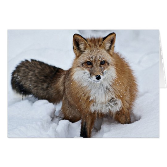 Red Fox in the Snow Card