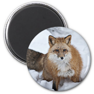 Red Fox in the Snow Magnet