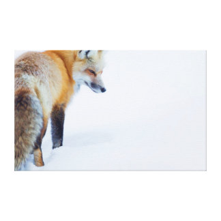 Red Fox in Winter Canvas Print