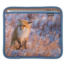 Red Fox In Winter Churchill Wildlife Ipad Sleeve at Zazzle