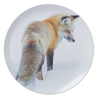 Red Fox in Winter Dinner Plate