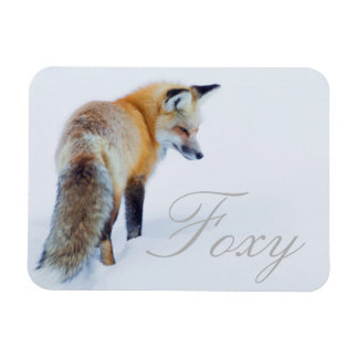 Red Fox in Winter Magnet