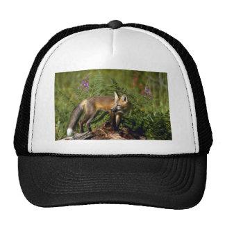 Red Fox kit Hat