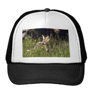 Red Fox kit Trucker Hats