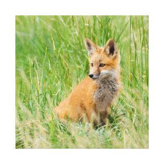 Red Fox Kit in grass near den Canvas Print