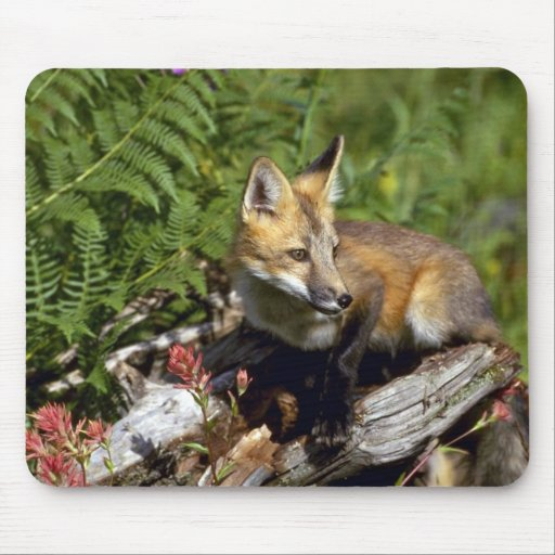 Red Fox kit Mouse Pads