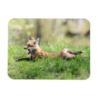 Red Fox Kit Rectangular Photo Magnet