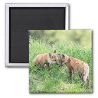 Red Fox Kits 2 Inch Square Magnet