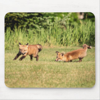 Red Fox Kits Playing Mouse Pad