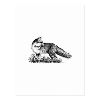 Red Fox (line art) Postcard