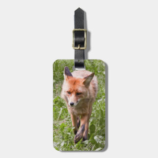 Red fox tags for bags