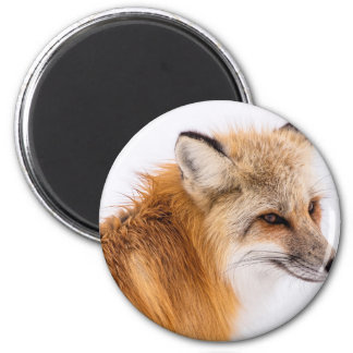 red-fox magnet