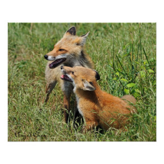 Red Fox Mama and Kit Poster