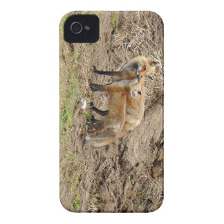 Red Fox Mother & Kit Affection iPhone 4 case