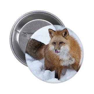 Red Fox ni the Snow Pins
