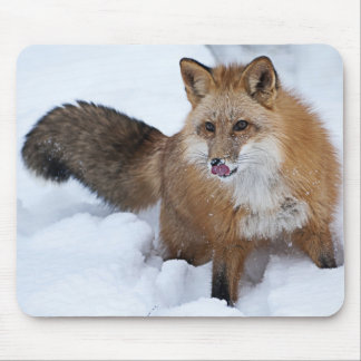 Red Fox ni the Snow Mousepads
