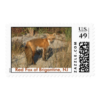 Red Fox of Brigantine, NJ Postage Stamp