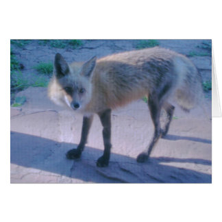Red Fox on Porch Card