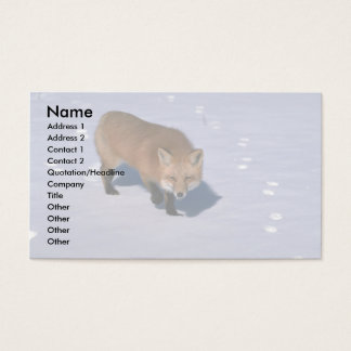Red Fox on snow Business Card