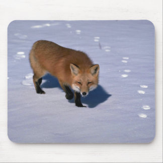 Red Fox on snow Mouse Pads