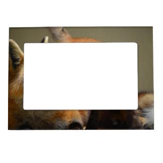 Red Fox Pair Frame Magnet