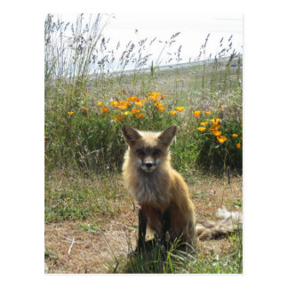 Red Fox Post Cards