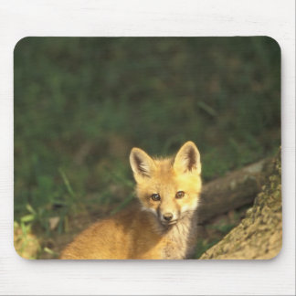 Red Fox pup in front of den (Vulpes vulpes) 2 Mouse Pad