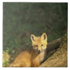 Red Fox pup in front of den (Vulpes vulpes) 2 Tile