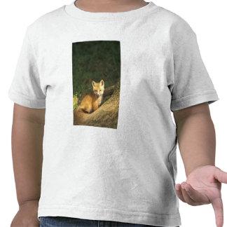 Red Fox pup in front of den Vulpes vulpes 2 T Shirt